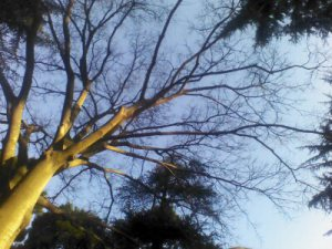 wpid-camerazoom-20120316171734602
